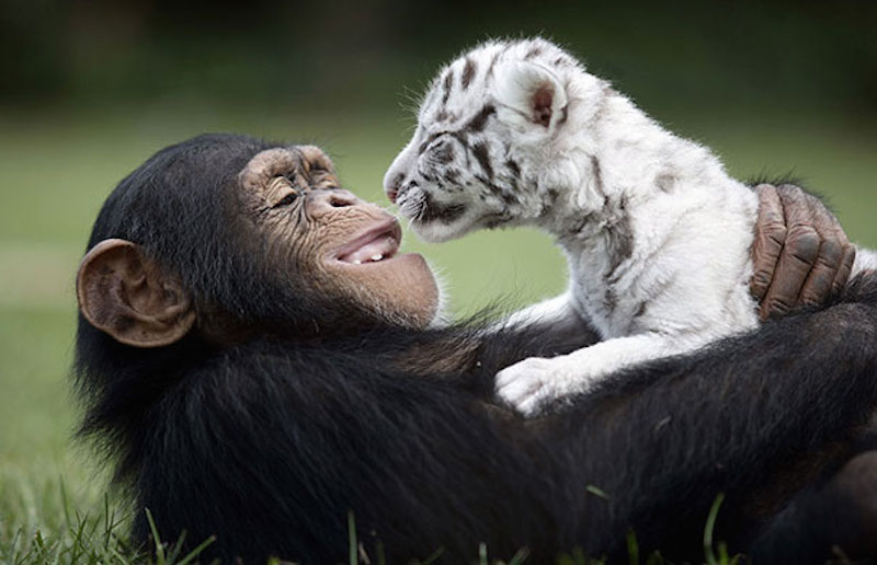 unusual-animal-friendship-15-1